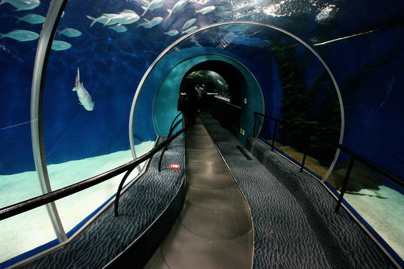 Картинка подводного моста вспоминает